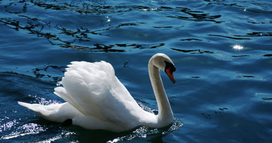 Royal Swan di Ainsworth Gaming: una recensione completa